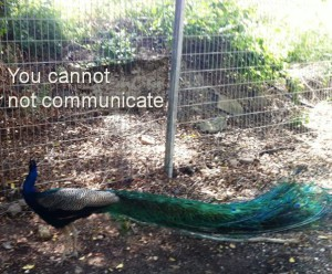 you-cannot-not-communicate-peacock-facing-fence